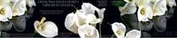 Фартук кухонный SP 086 Цветы